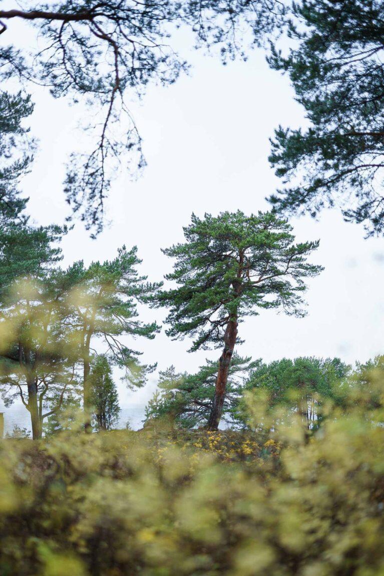 Nature in Laulasmaa
